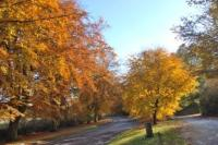 Autumn Colour on Elham Valley entering Barham by Diana Forrest