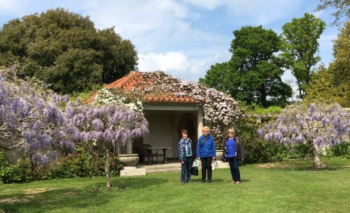 Wisteria trees at Hole Park
